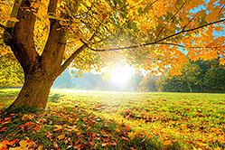 Martha's Vineyards' Best Fall Foliage Spots are Reachable by Island Car Rental