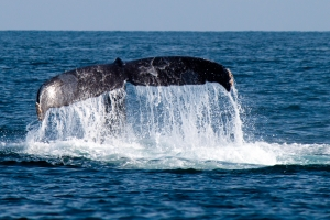 New Bedford Ferry and A-A Island Auto Rentals Make Whale-Size Fun Possible